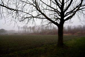 Treurige mist van Jaap Kloppenburg