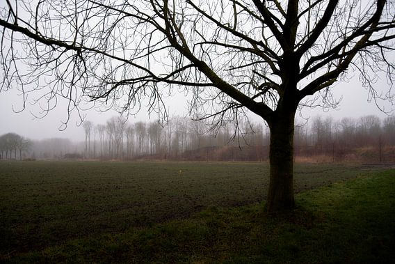 Treurige mist