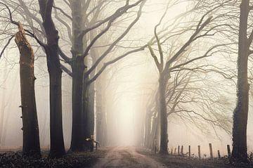 Forest serene sur Rob Visser