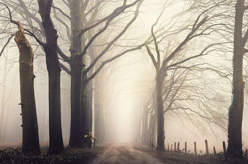 Forest serene van Rob Visser