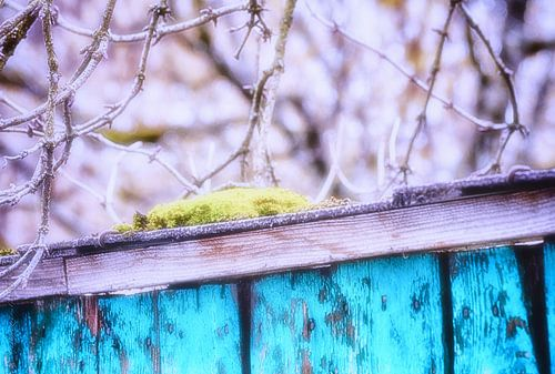 A Little Moss von