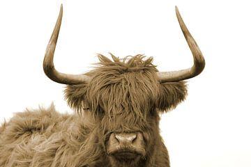 Schotse hooglander kop met grote horens sepia van Sascha van Dam