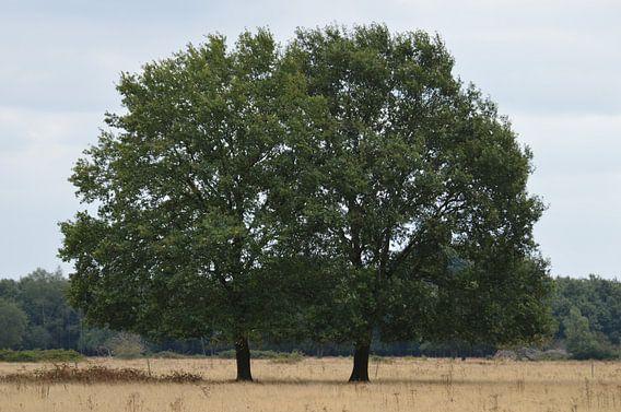 Bomen in de Brobbelbies