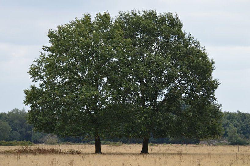 Bomen in de Brobbelbies van richard de bruyn