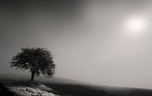 Mist in Rheinland Pfalz van