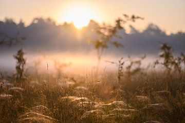 Sonnenlicht über den Spinnweben von Tania Perneel