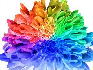 Regenboog bloem