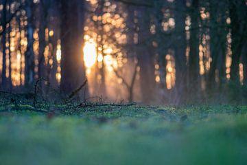 märchenhafter Waldboden von Tania Perneel