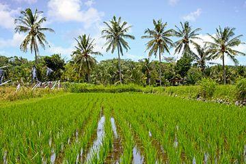 Tropisch landschap met rijstvelden op Java in Indonesie van Nisangha Masselink