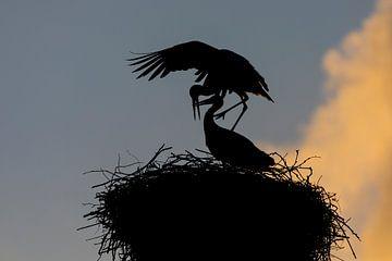 Romantik am frühen Morgen von Jan-Willem Mantel