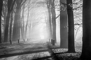 Het Mastbos paaltjespad in de mist van