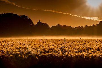 Gouden koren... von Hermen van Laar