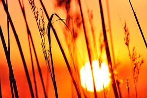 Achterhoekse zonsondergang bij de Oude IJssel