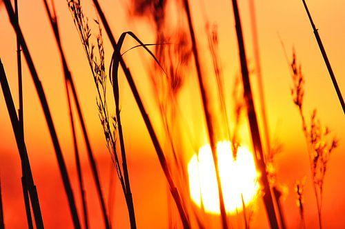 Achterhoekse zonsondergang bij de Oude IJssel van