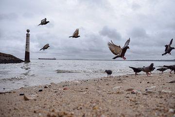 Vogels op de kust von Kim de Been