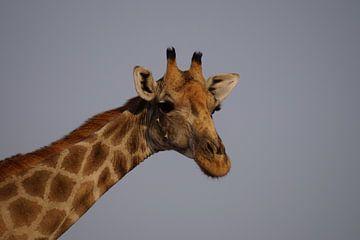 Grappige giraffe van Erna Haarsma-Hoogterp