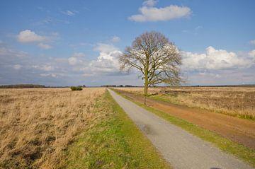 Eenzame boom Dwingelderveld sur Remco Swiers