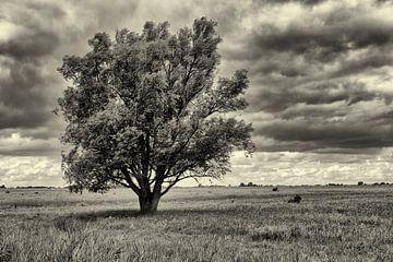 Solitär Baum im Grasland in schwarz und weiß von Photo Henk van Dijk