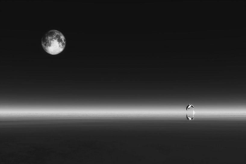 Dierenrijk – De dolfijn met de maan van Jan Keteleer