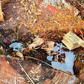 Nature'sPaintings - Abstract Gekapte Boom Hout Water 7 van Nicole Schyns