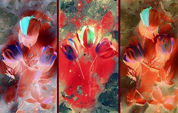 Tulpenrausch von Vera Markgraf