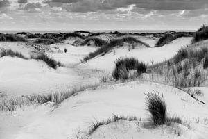 White dunes Texel van