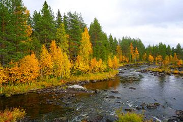 Herbst an Schwedens Seen von Thomas Zacharias
