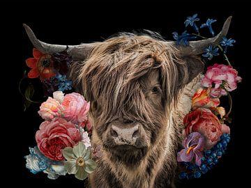 Schottischer Highlander in den Blumen von John van den Heuvel