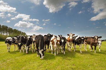 Koeien in het weiland van Menno Schaefer