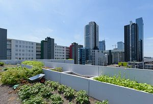 Dakakker Rotterdam centrum, Zuid Holland, Netherlands