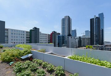 Dakakker Rotterdam centrum, Zuid Holland, Netherlands sur Martin Stevens