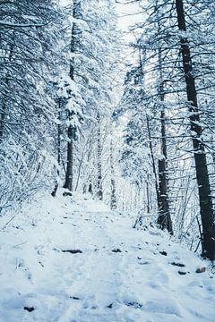 Bergop In Winters Bos sur Patrycja Polechonska