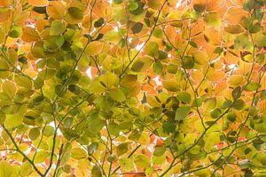 Feuilles de printemps vert menthe