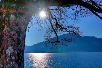 Sonne küsst Baum querformat von Roith Fotografie