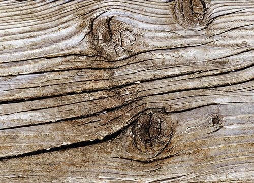 Wood von Sarah Richter
