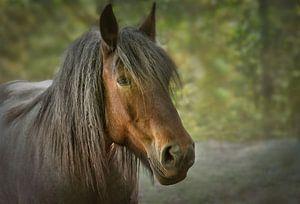 Pferd von Dieter Beselt