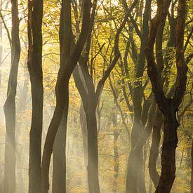 L'arbre penché sur Albert Lamme