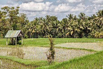 Riesfeldern Ubud - Bali - Indonesia von Dries van Assen