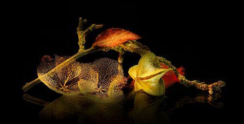 Autumn von C.A. Maas