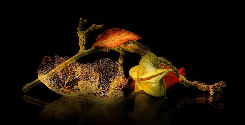 Autumn van C.A. Maas
