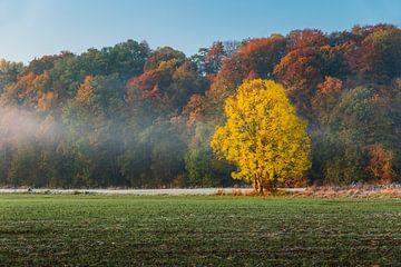 couleurs en automne sur Bart Harmsen