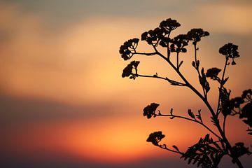 Silhouet van bloem bij zonsondergang van Cor de Hamer