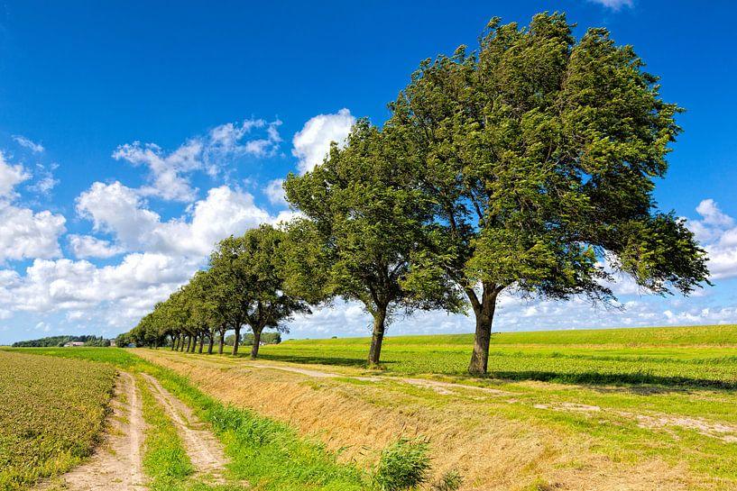 typisch Hollands polder landschap  van eric van der eijk