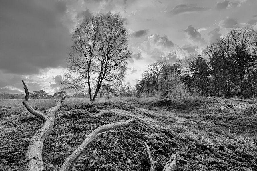 Winterlandschap met boom van Peter Bolman