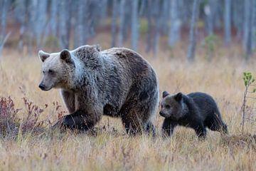 Bruine beer met jong van Merijn Loch