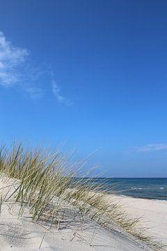 Zarte Gräser von Ostsee Bilder
