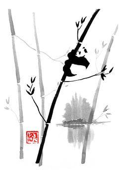 pand in zijn boom van philippe imbert