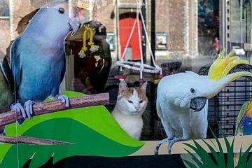 Kat papegaaienwinkel van Robert van Willigenburg