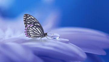 Vlinder van Judith Robben