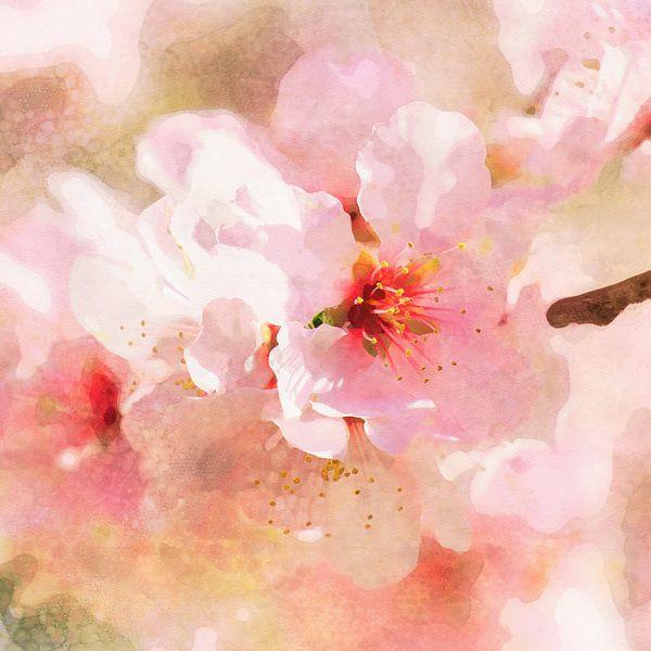 Kersenbloesem van Andreas Wemmje
